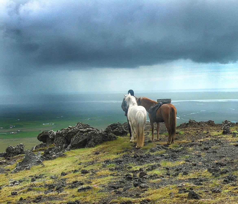 Photograph Horse trip by Anna Guðmundsdóttir on 500px