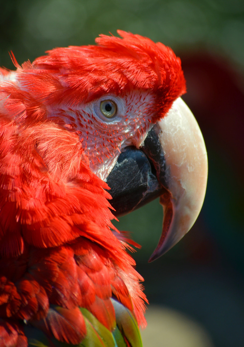 Photograph Parrot.! by joan koch on 500px