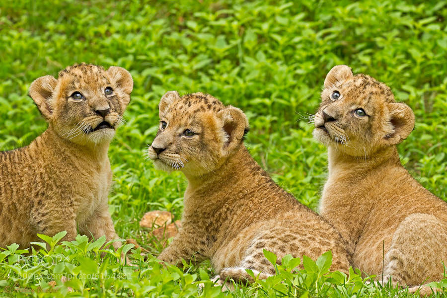 African Princesses by Ashley Vincent
