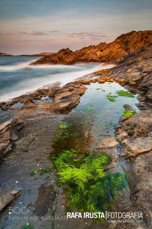 Photograph Green by Rafa Irusta on 500px