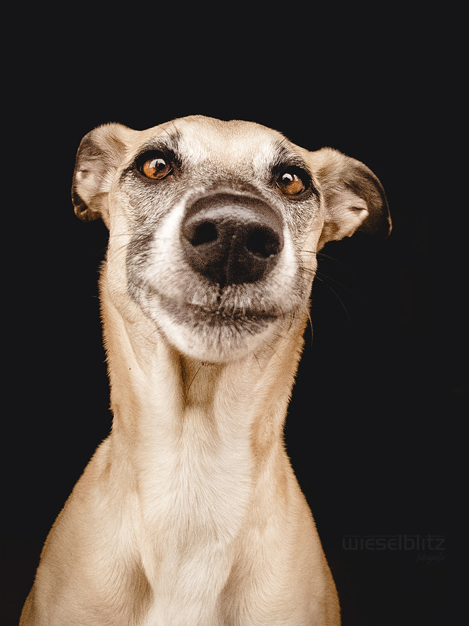 Photograph Sweetest face ever by Elke Vogelsang on 500px