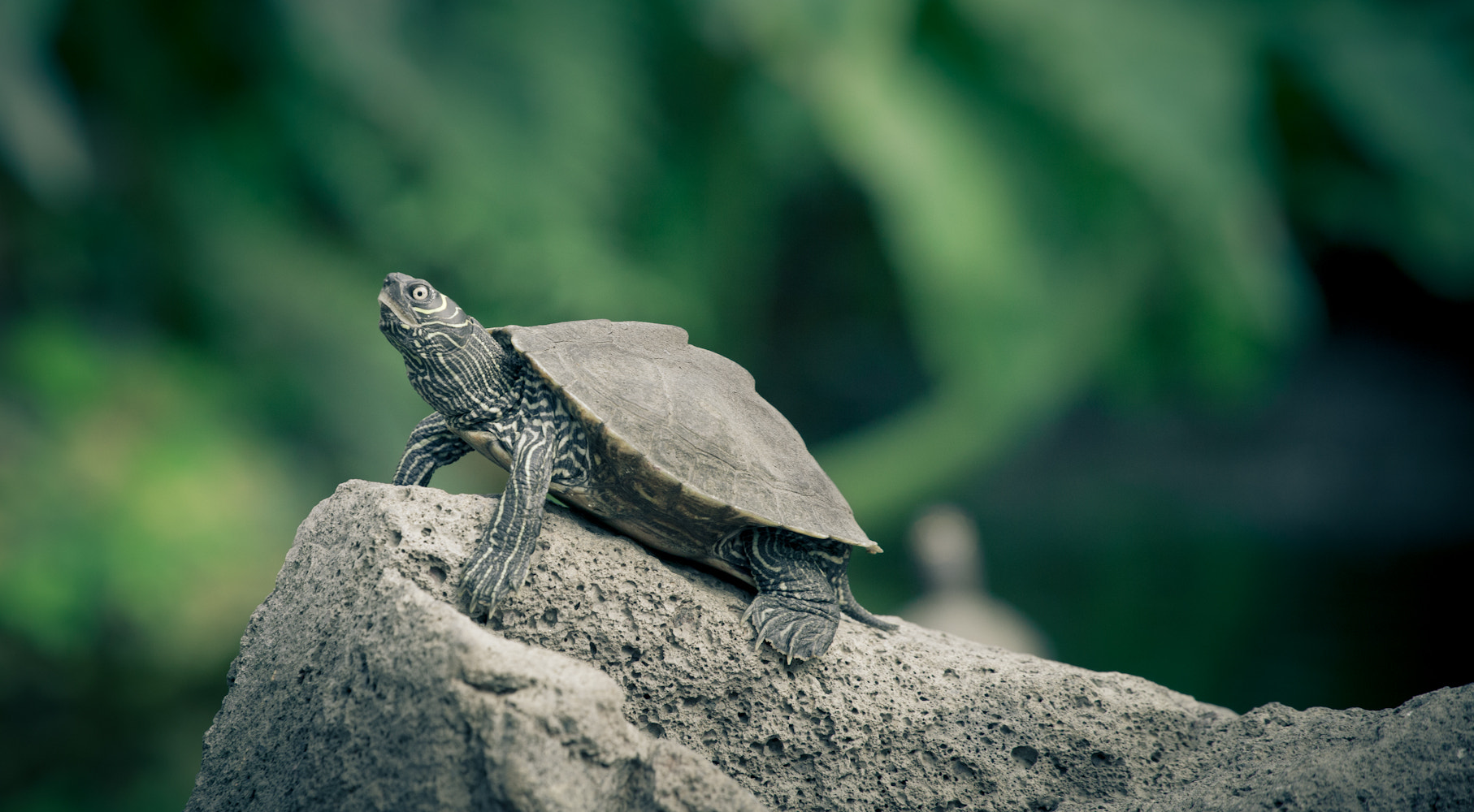 Photograph Turtle by Hamid S. on 500px