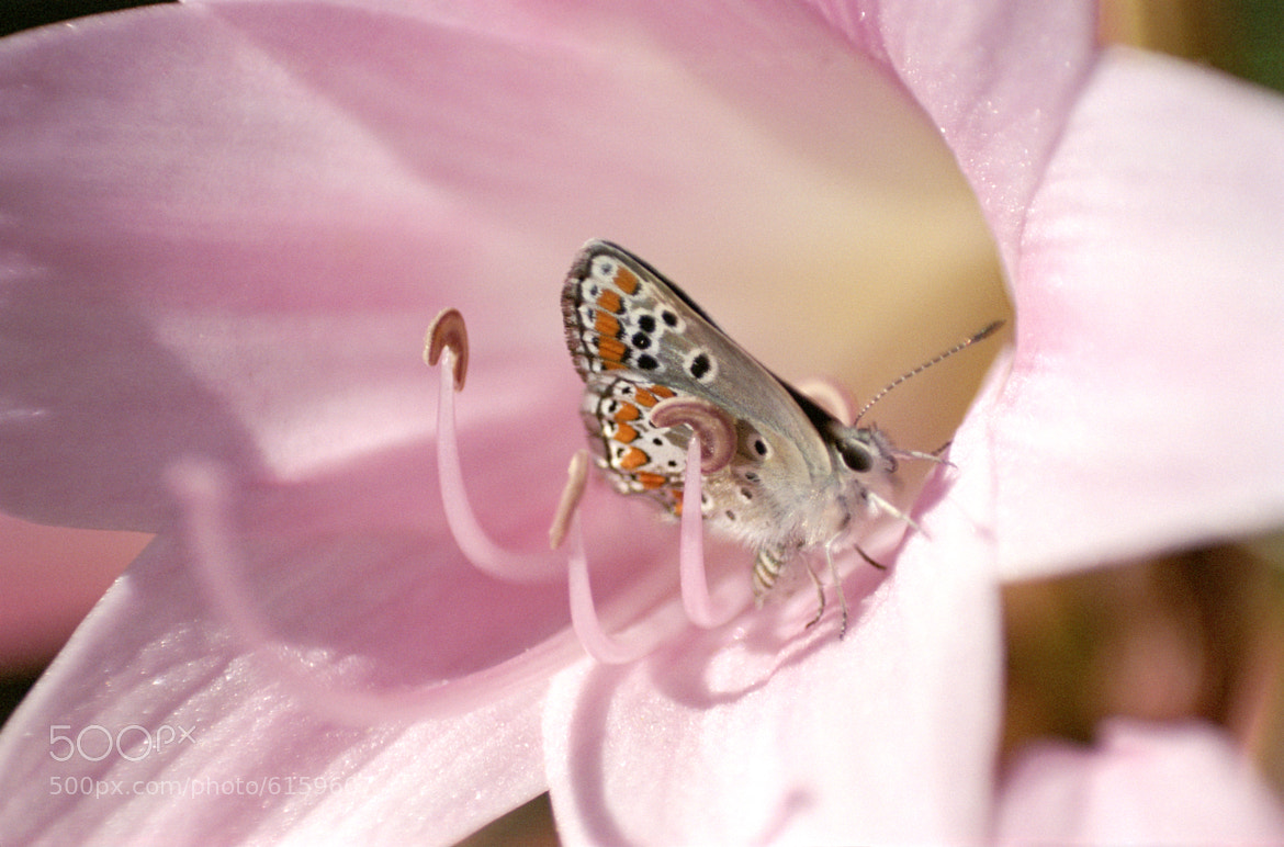 Photograph butterfly by joseph Dupouy on 500px
