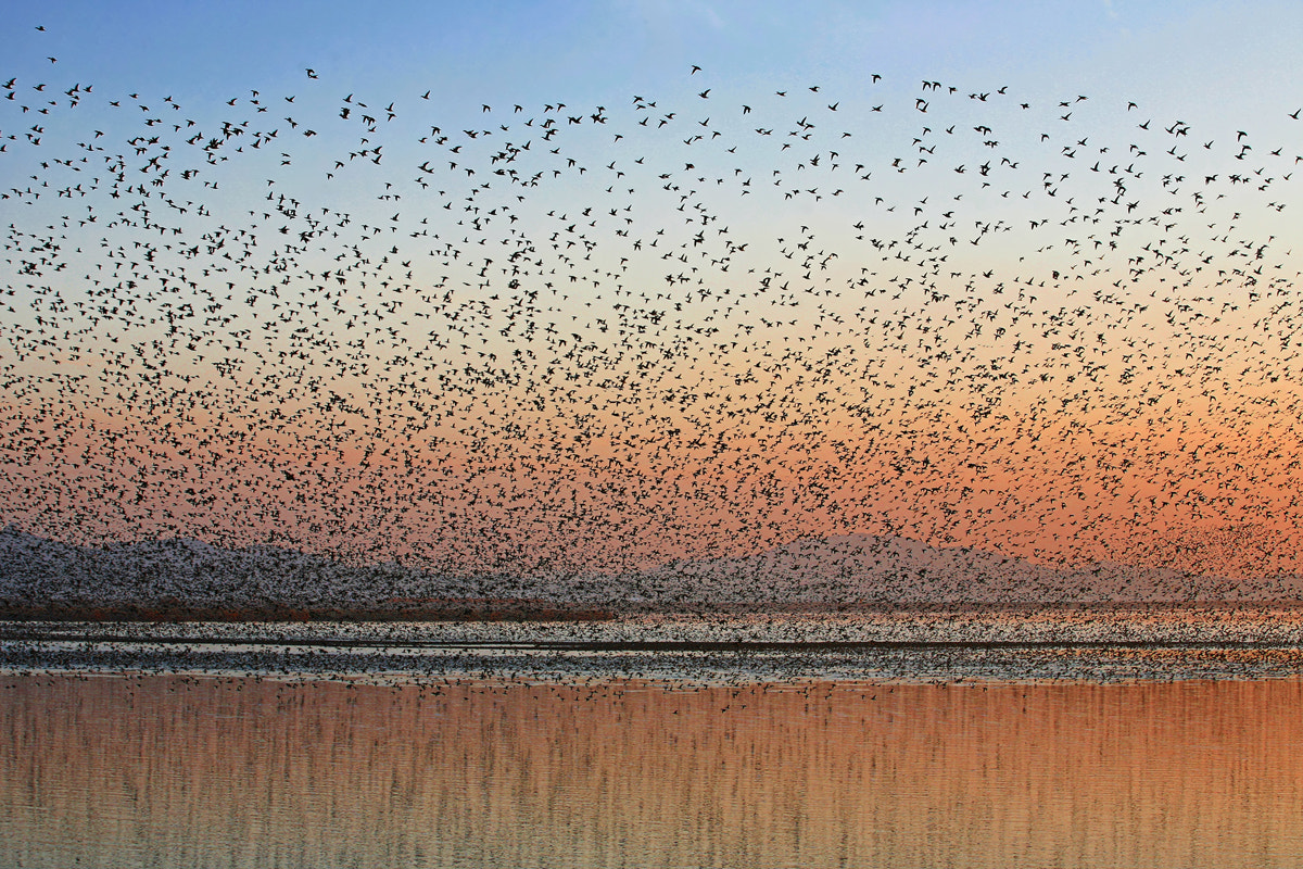 Photograph Birds by SPACE HONG on 500px