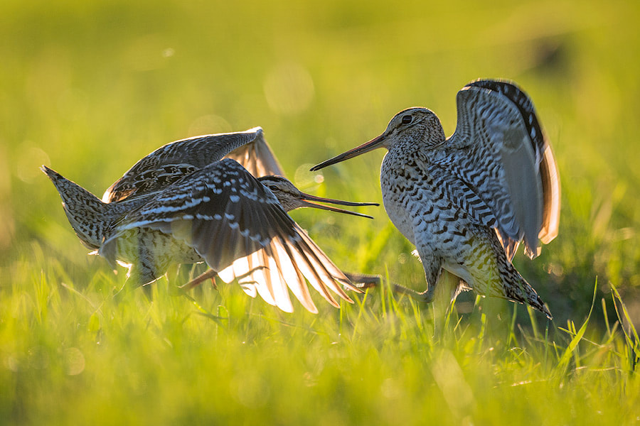 Photograph The duel by Sergey Ivanov on 500px