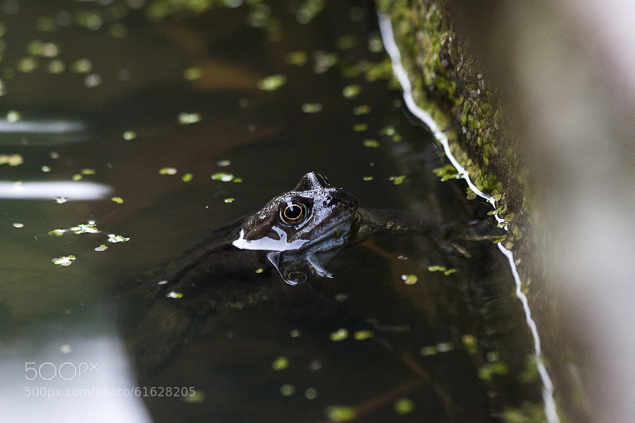 Photograph Frog. by Katie Halsall on 500px