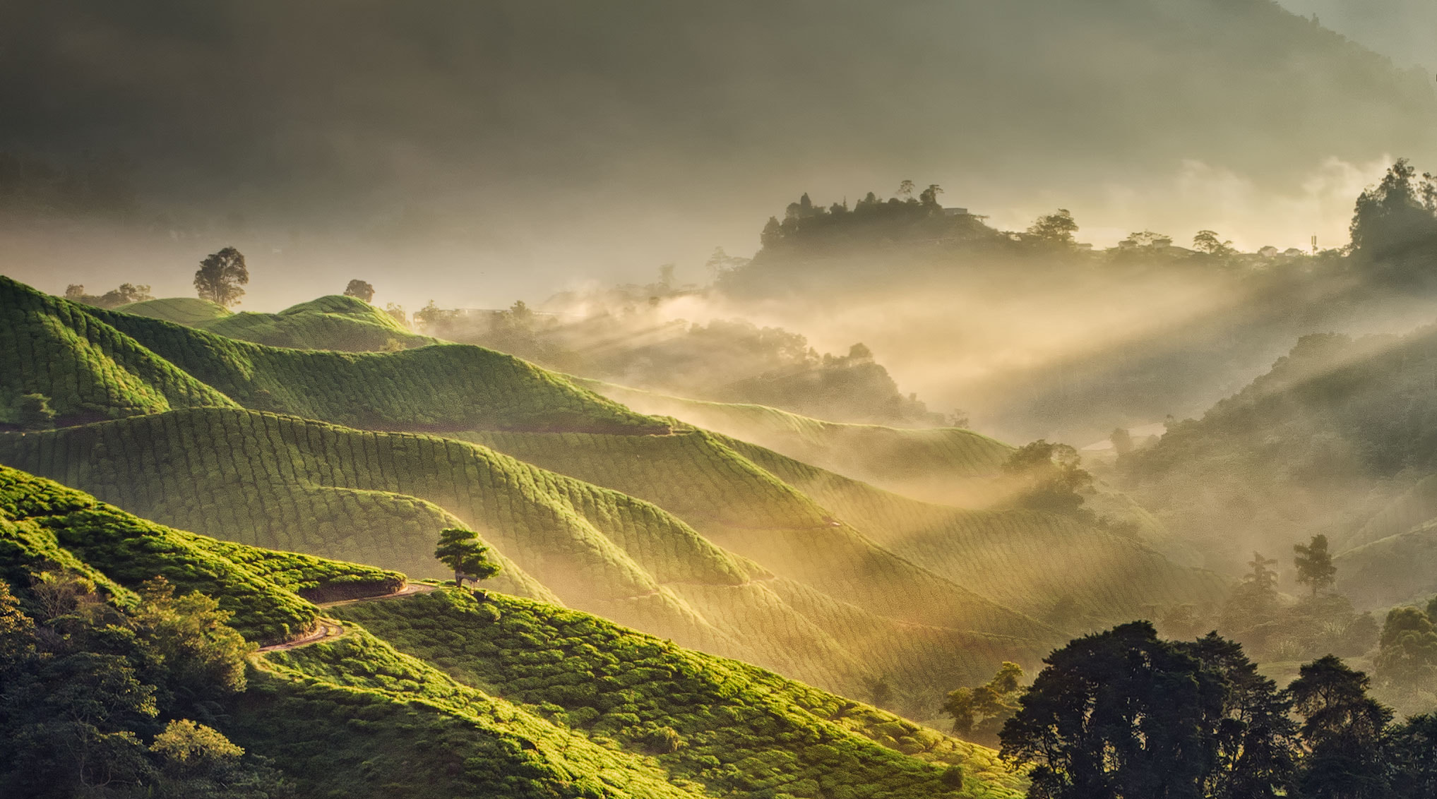 Photograph MorningLight by Grey Chow  on 500px