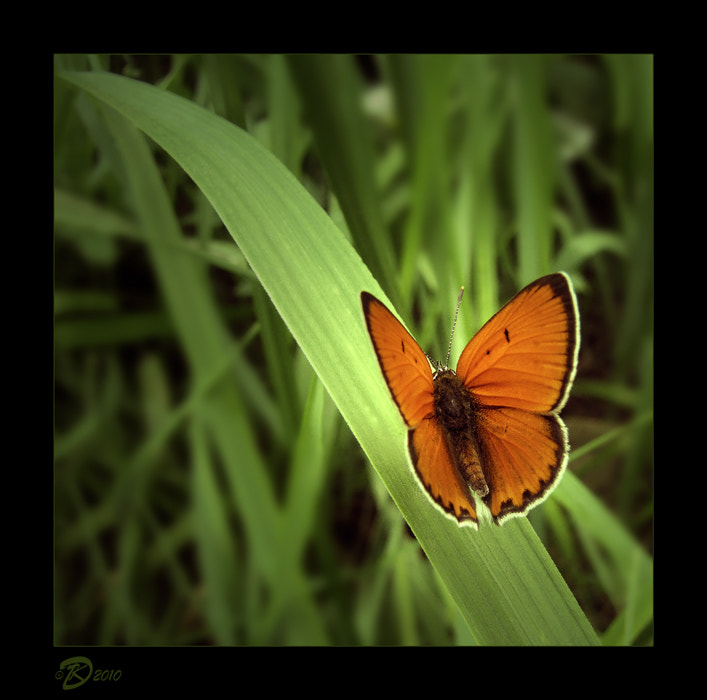 Photograph Butterflies album: 3 by no_gravity * on 500px