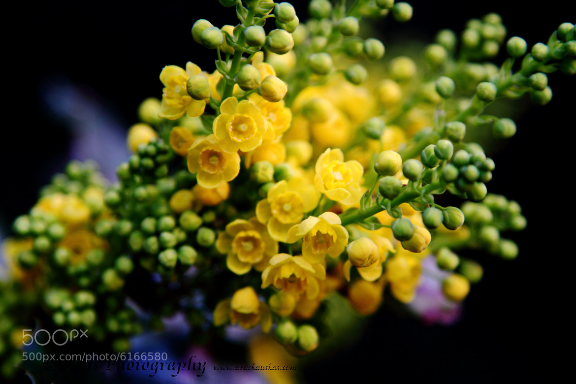Photograph spring by Arvis PhotoBeam on 500px