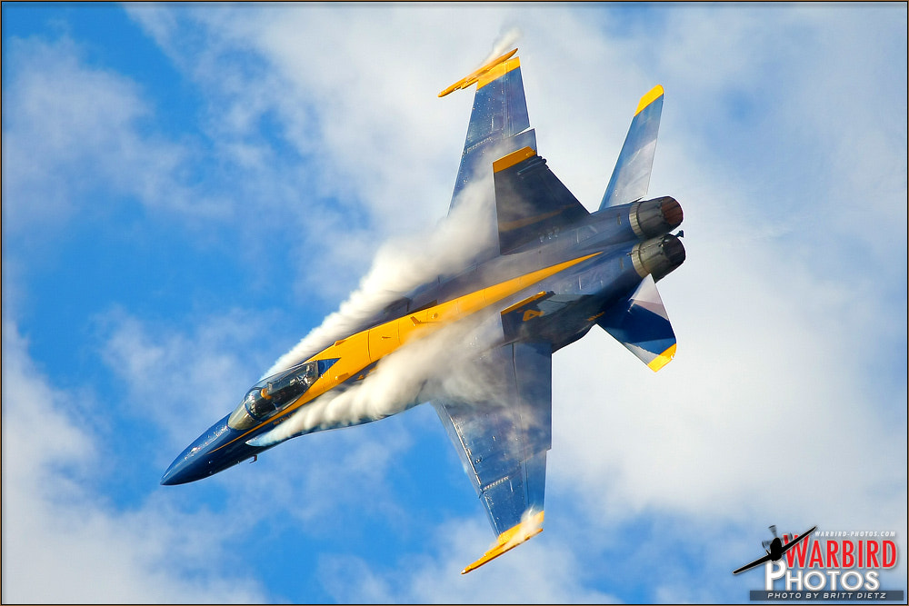 Photograph Blue Angel Whiskers by Britt Dietz on 500px