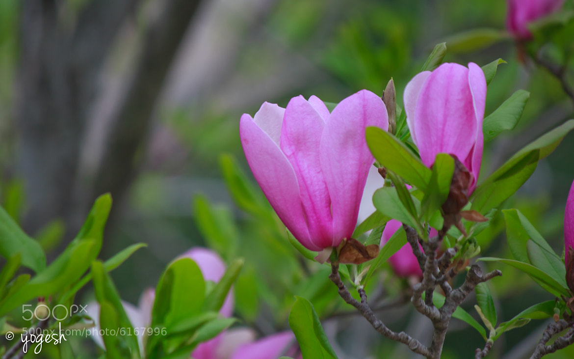 Photograph Spring Flowers by Yogesh Arora on 500px