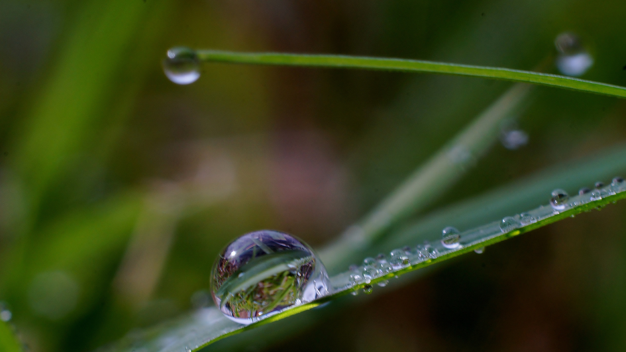 Photograph Morn'n Dew by Jun Florentino on 500px