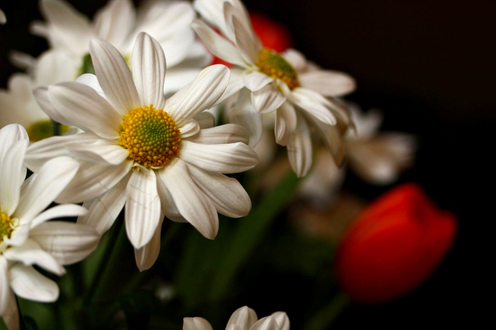Photograph Spring Flowers by Mark Prince on 500px