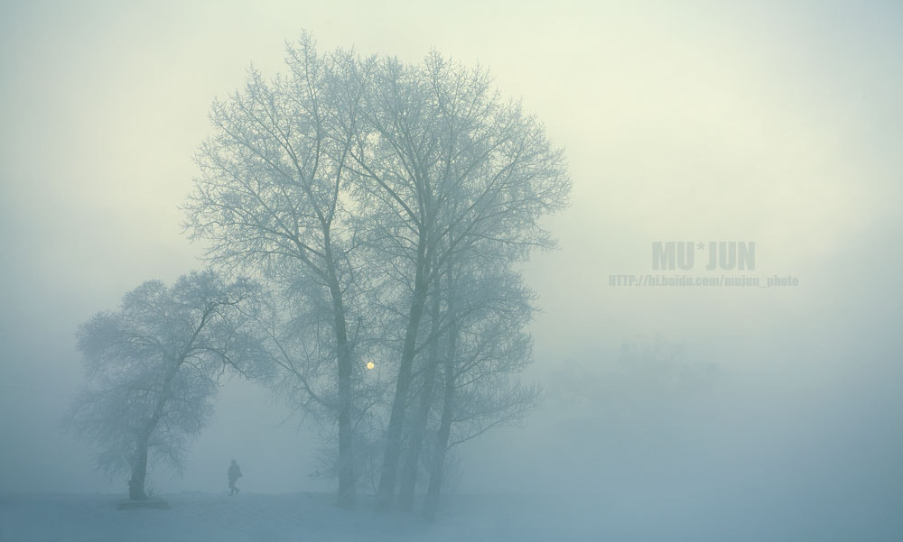Photograph the mist attached to trees by JUN MU on 500px