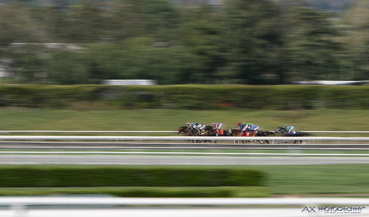 Photograph Horse Racing by ALEX S KIM on 500px