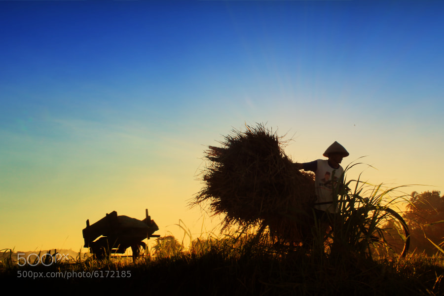 Photograph The Farmer by 3 Joko on 500px