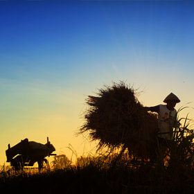 The Farmer by 3 Joko (3Joko)) on 500px.com