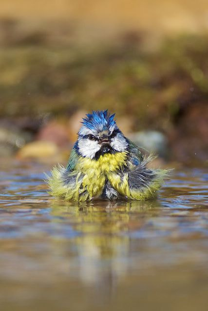 Photograph Bad Hair Day! by David Featherbe on 500px