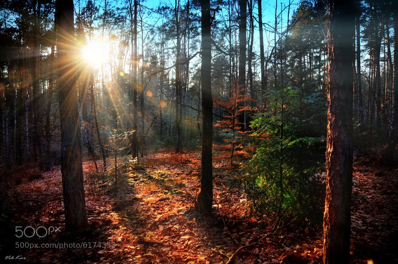 Photograph Sunset by Viktor Korostynski on 500px