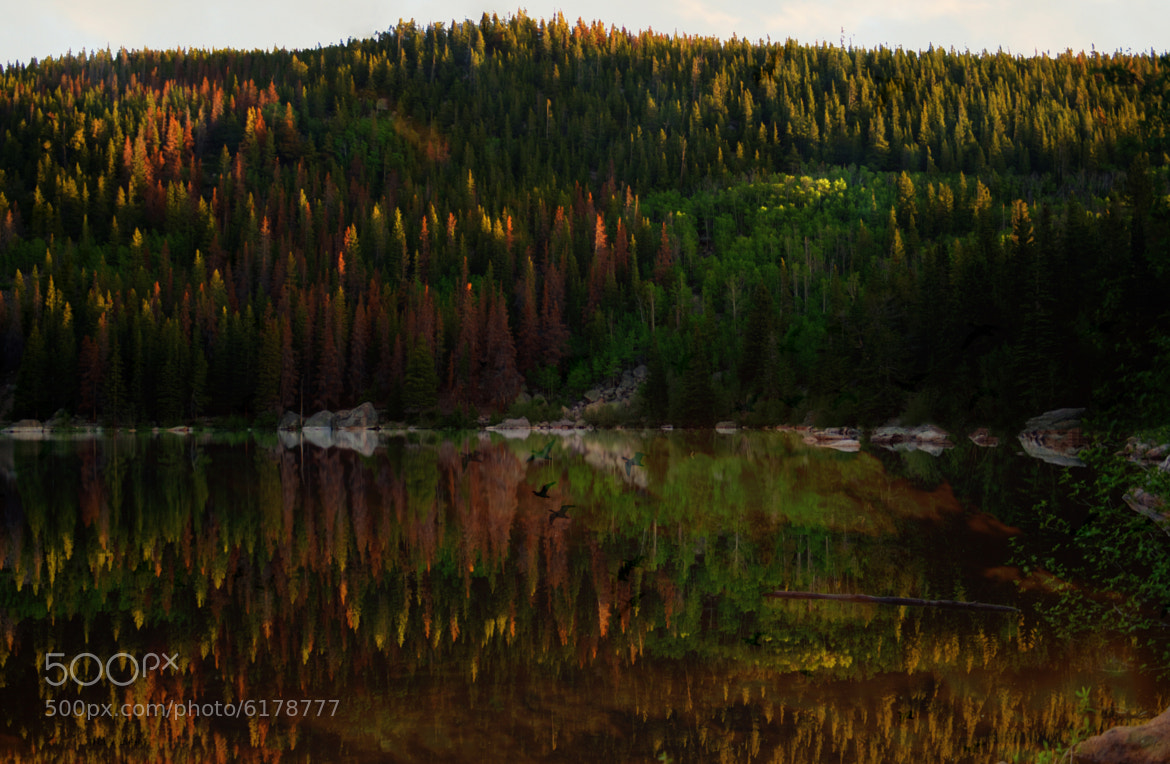 Photograph Reflections and Such by Dorothy Cunningham on 500px