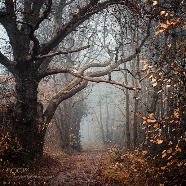 Photograph Autumn Mantra by J-W v. E. on 500px