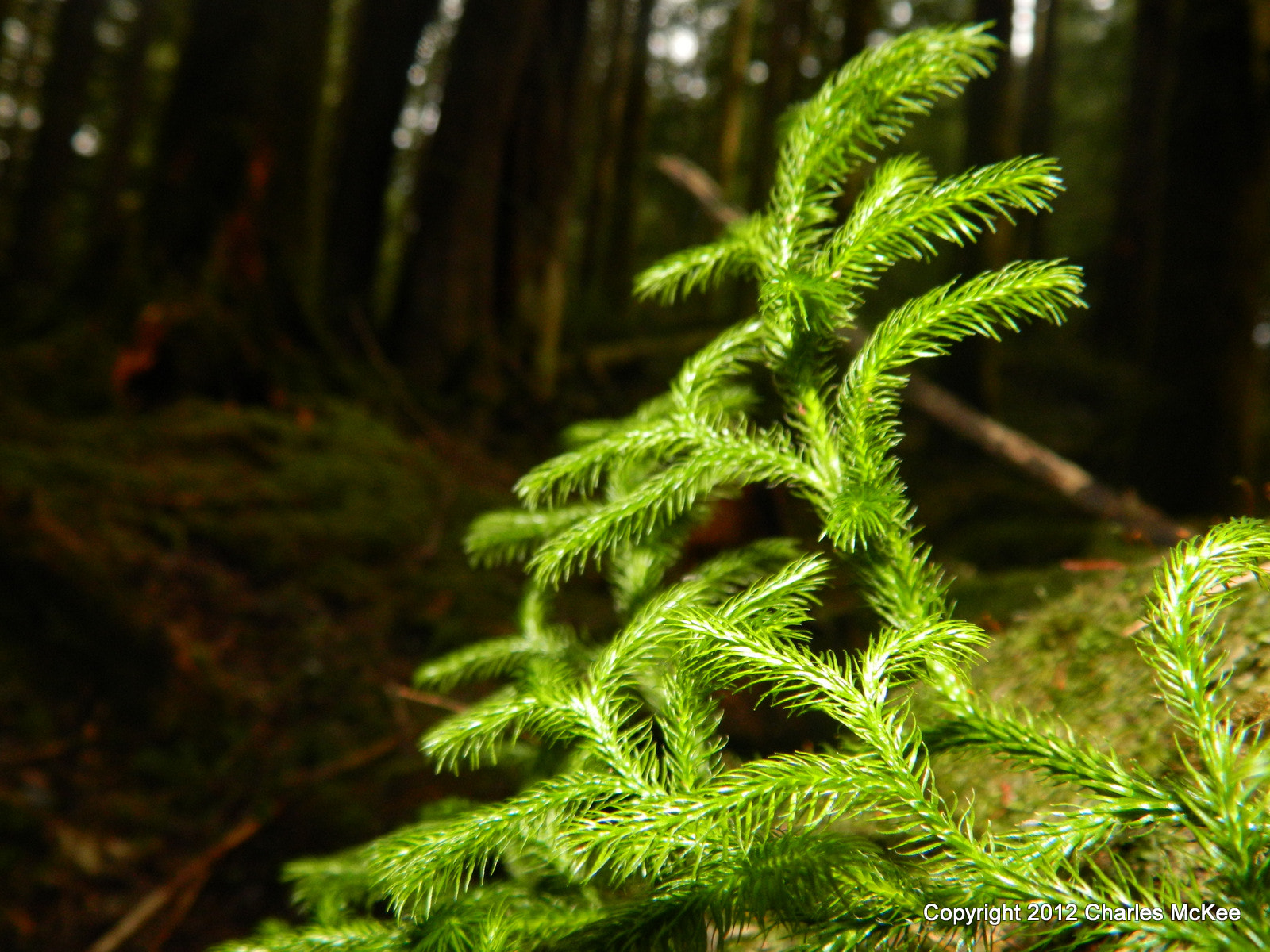 Photograph Club Moss by Charlie Mckee on 500px