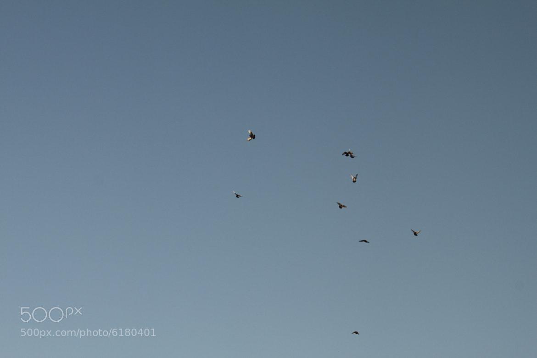 Photograph Birds by Ayman Shaltoni on 500px