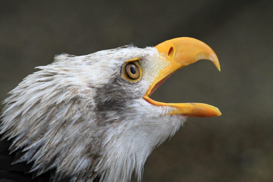 Photograph Eagle - Namibia by Benjamin Nocke on 500px