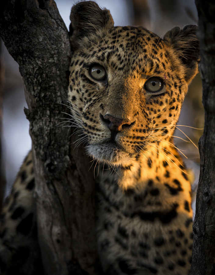 Beauty de Chris Fischer sur 500px.com