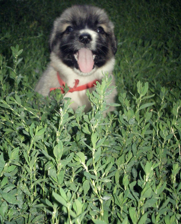 Photograph puppy by Tudor Livia on 500px