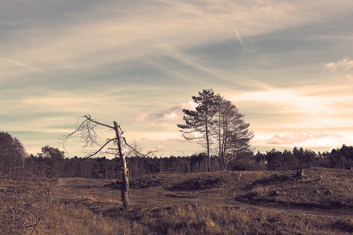 Photograph destroyed nature by René Centa on 500px