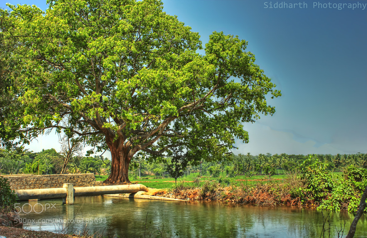 Photograph Mother of all trees by Siddharth Ramanujam on 500px