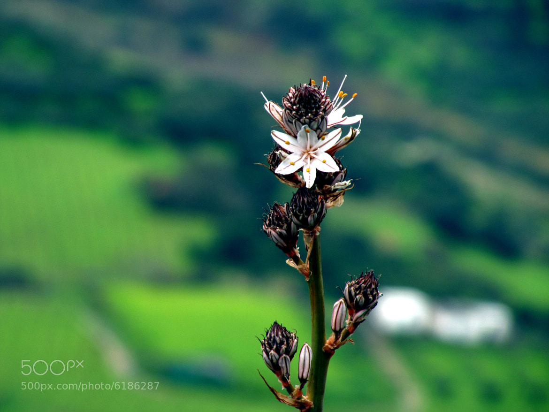 Photograph flower on the mountain* by Eva Atzoletaki on 500px