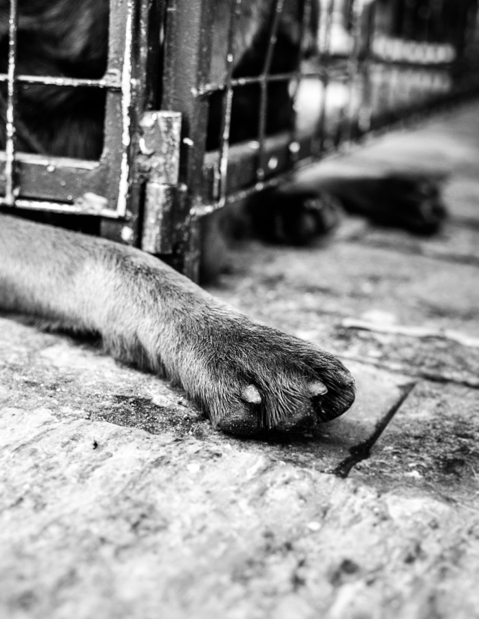 Photograph Stray for adoption by Mario Dias on 500px