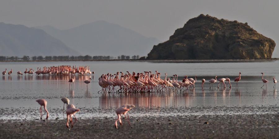 Flamingo love parade