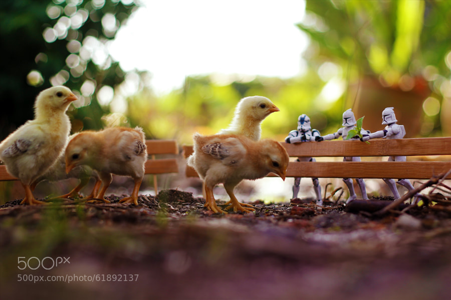 Photograph Little Farm by Zahir Batin on 500px