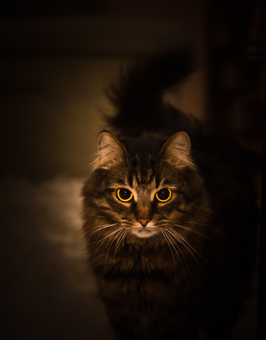 Photograph a magical cat by Sophie Shliselberg on 500px
