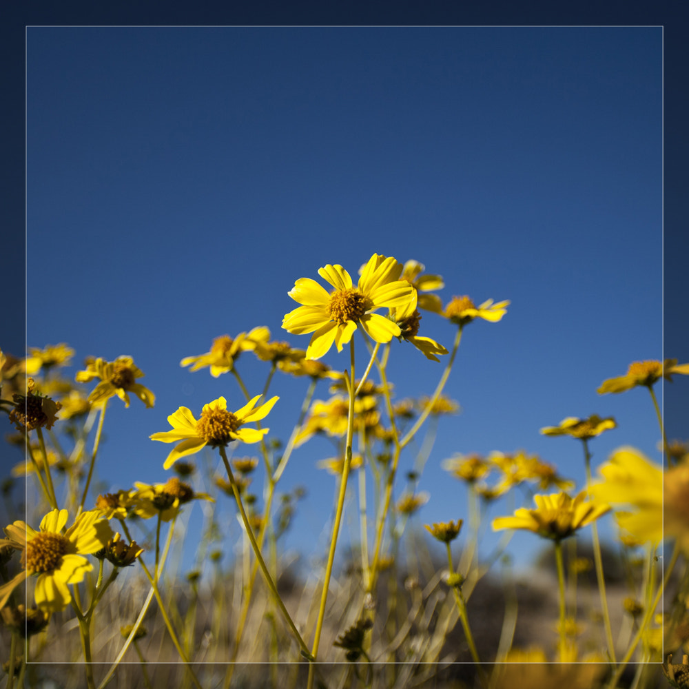 Photograph Wildflower, CA by shifting on 500px