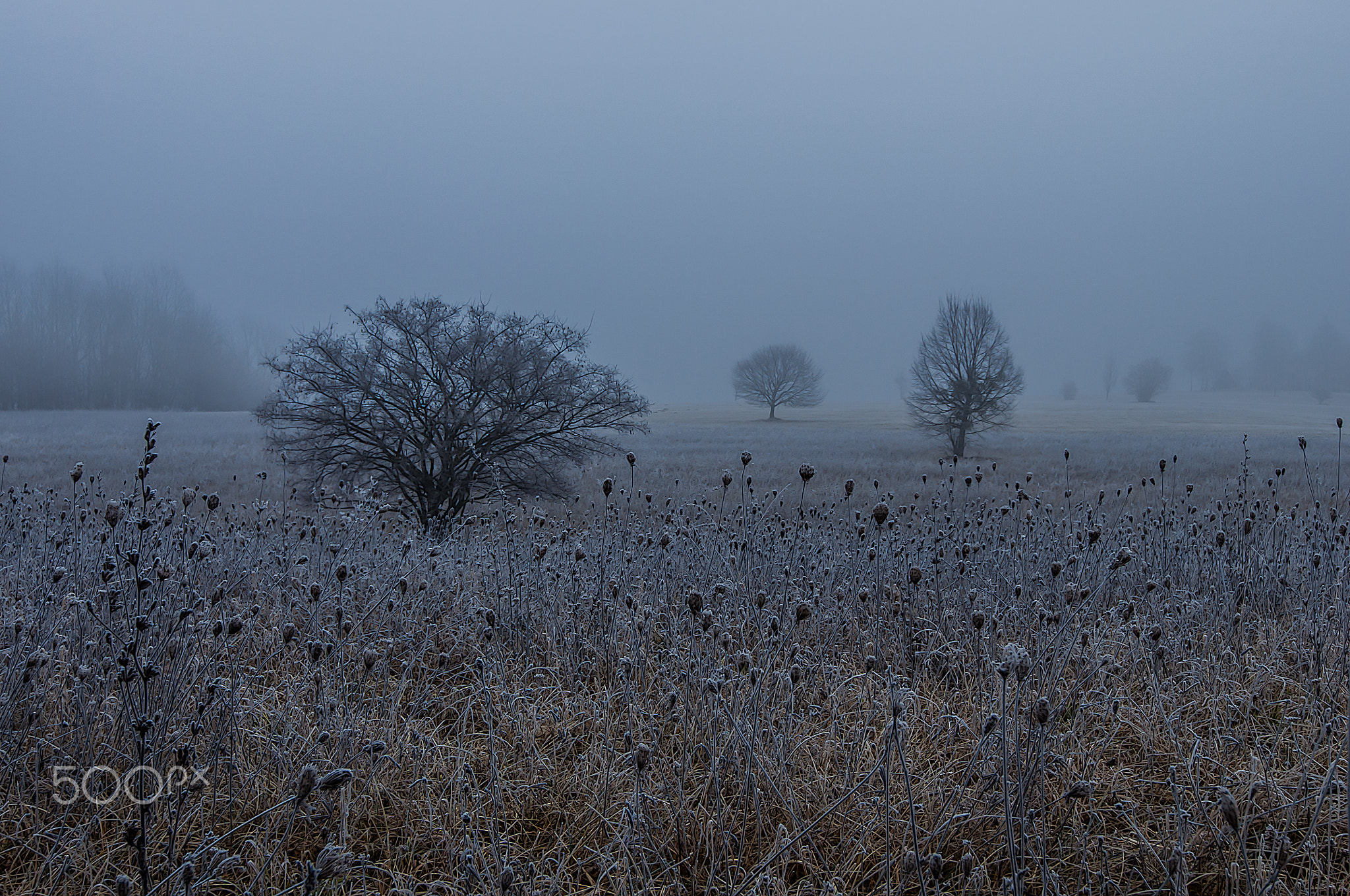Photograph Frostmorgen by Leo Pöcksteiner on 500px