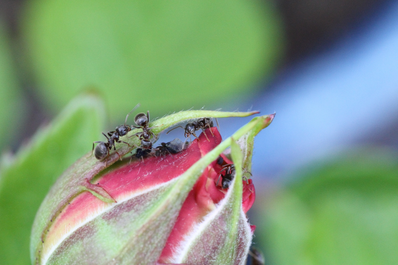 Photograph Ants at Work by Philipp K on 500px