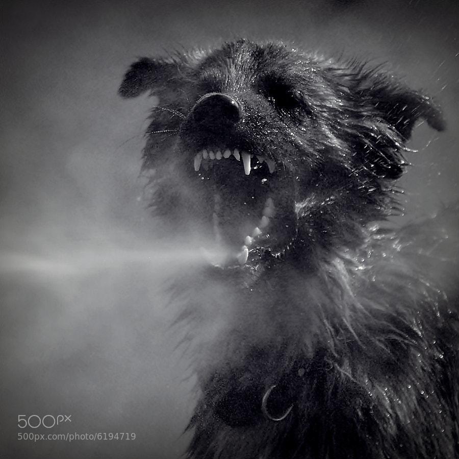 Photograph dragon by Sebastian Luczywo on 500px
