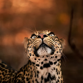 Gazing Up by greg du toit (gregdutoit)) on 500px.com
