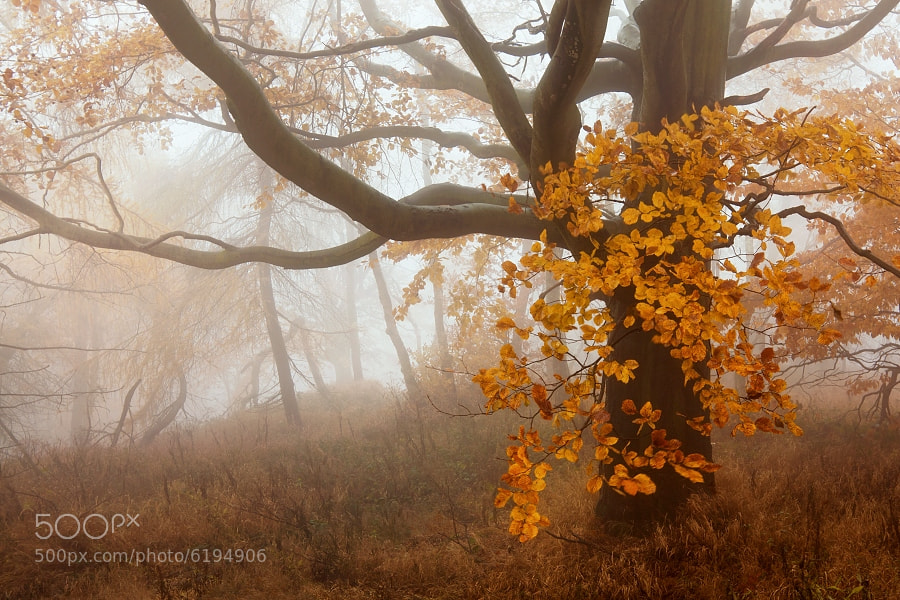 Photograph Autumn forest 4 by Daniel Řeřicha on 500px