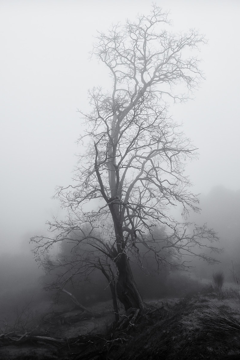 Photograph Tree in Winter Fog by Stefan Bäurle on 500px