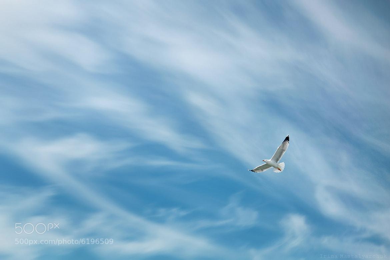 Photograph fly freely by Irina  Mastalyarchuk on 500px