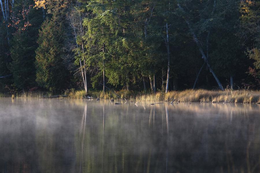 Calm Morning at the lake