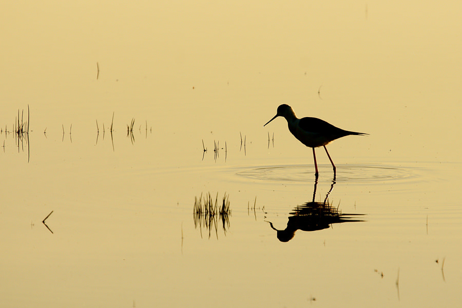 Photograph Silhouette by Janez Tolar on 500px
