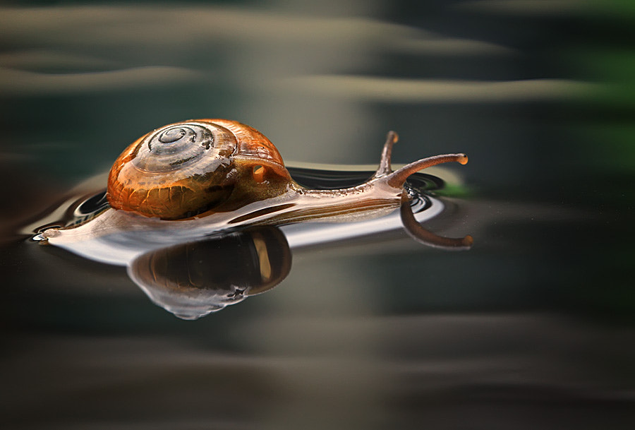 Photograph slow but sure by shikhei goh on 500px