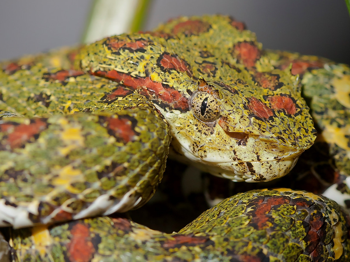 Photograph Snake's Eyes by Miguel Angel Leyva on 500px