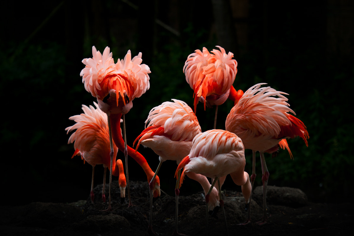 Photograph Flamingos by Billy Currie on 500px